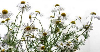 Homeopathic Hemorrhoid Treatment